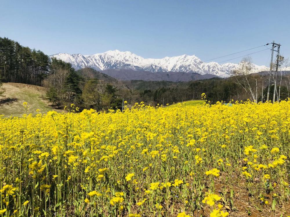 菜の花が咲く中山高原
