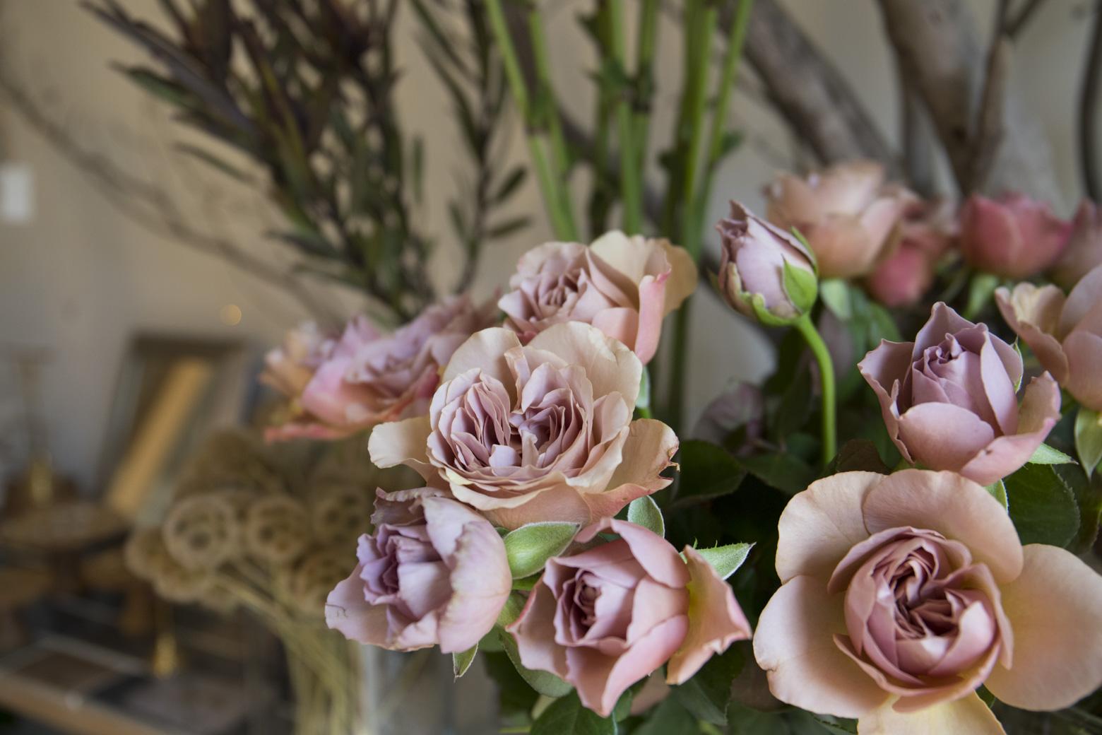 カフェラテという品種のバラ