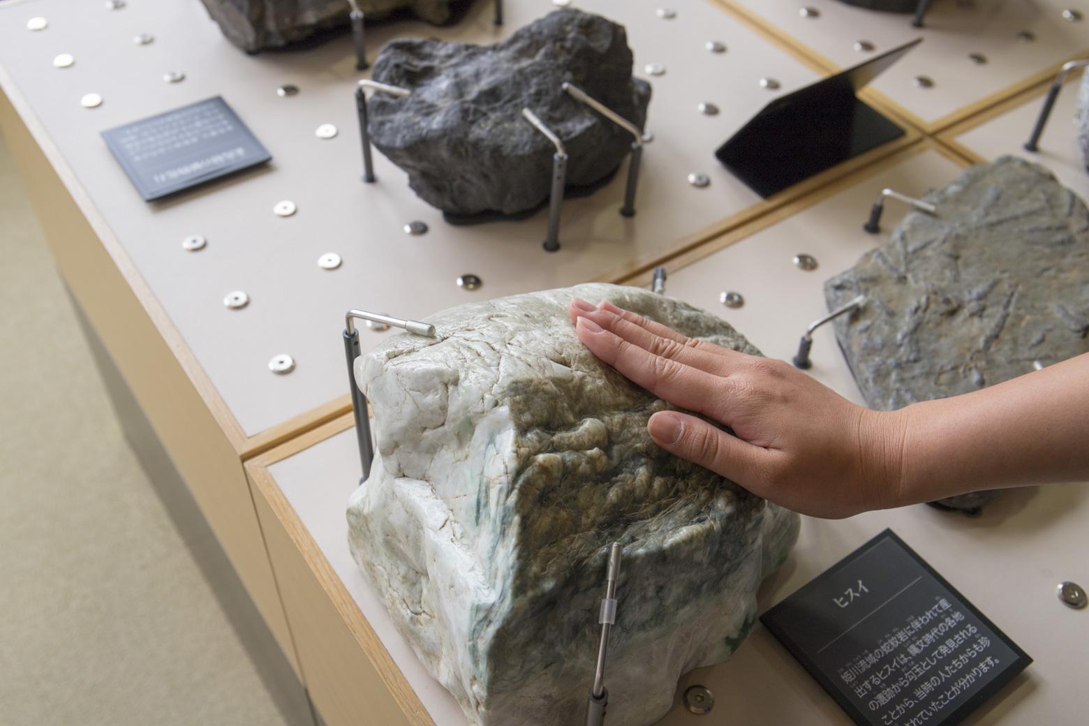 化石などは触ることができます