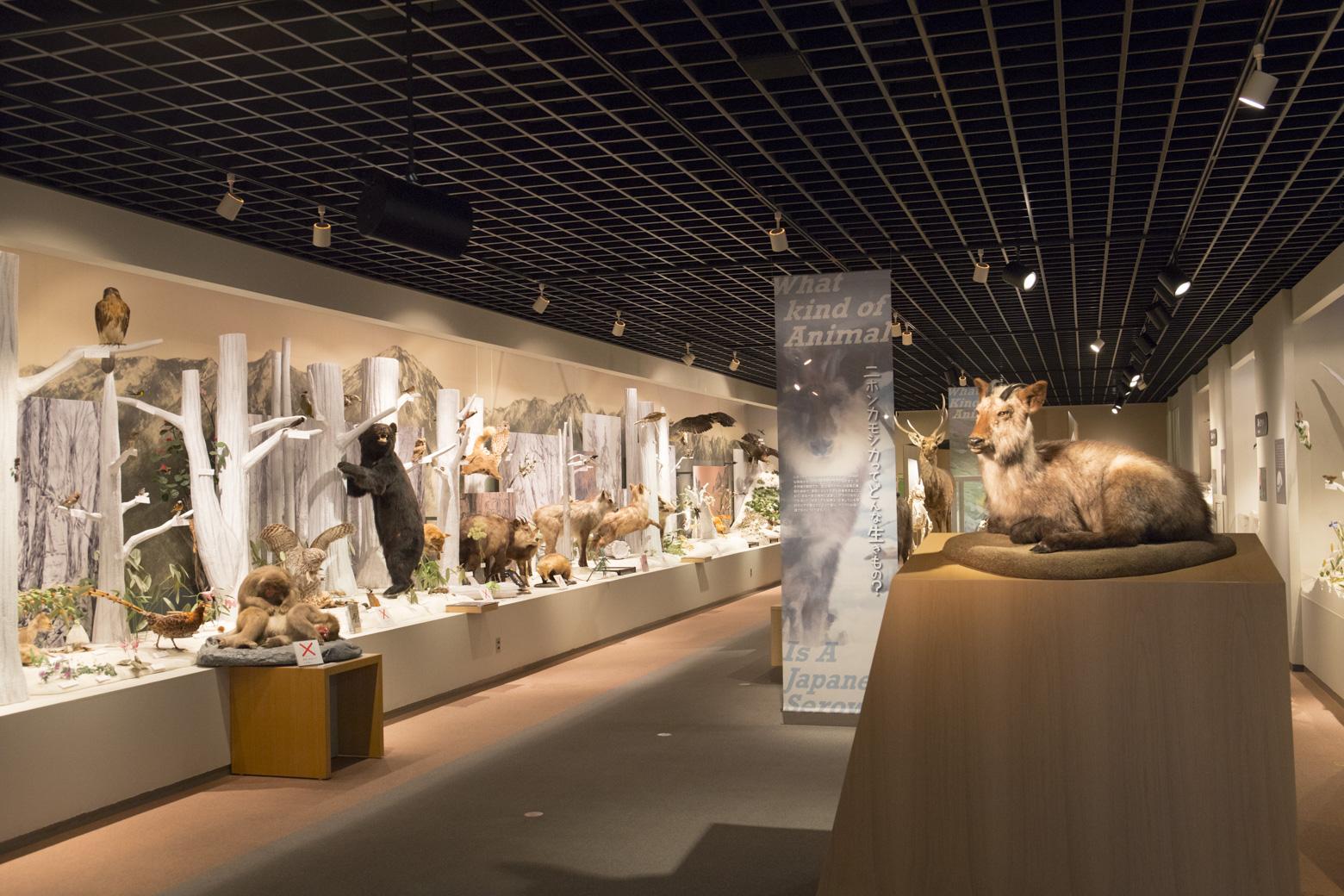 2階展示「今を生きる生き物たち」