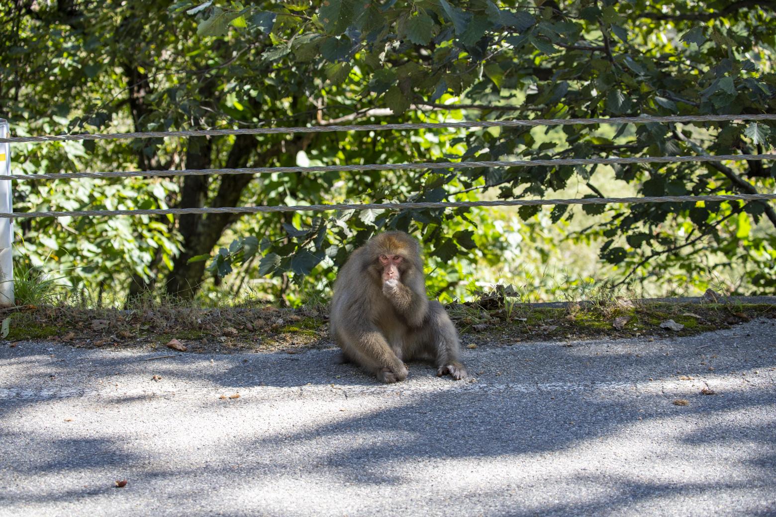 野生の猿に注意