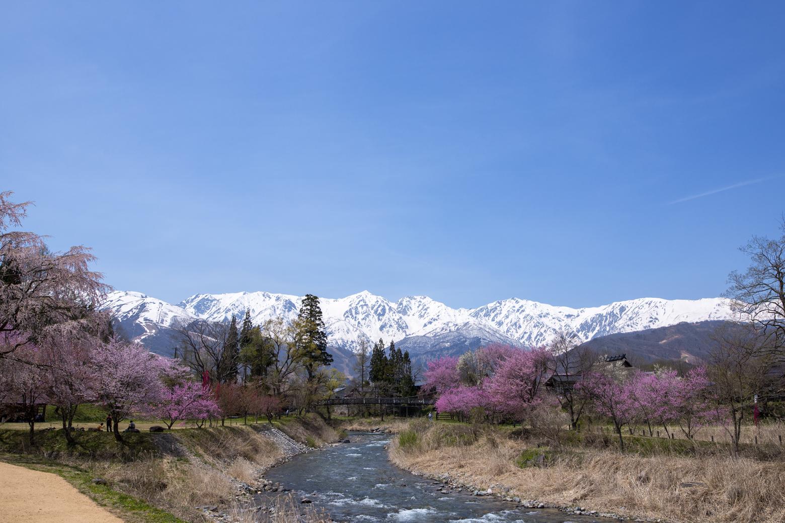 桜が見頃になる4月~5月がオススメ