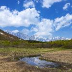 【栂池自然園と八方尾根自然研究路】2020年6月1週目の様子をレポ