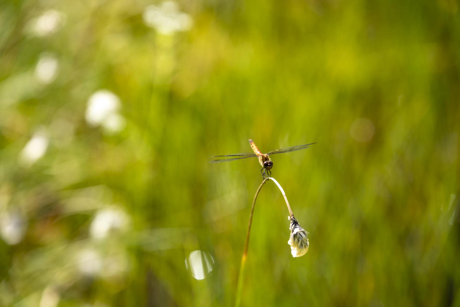「小さい花」が目立つ8月から9月