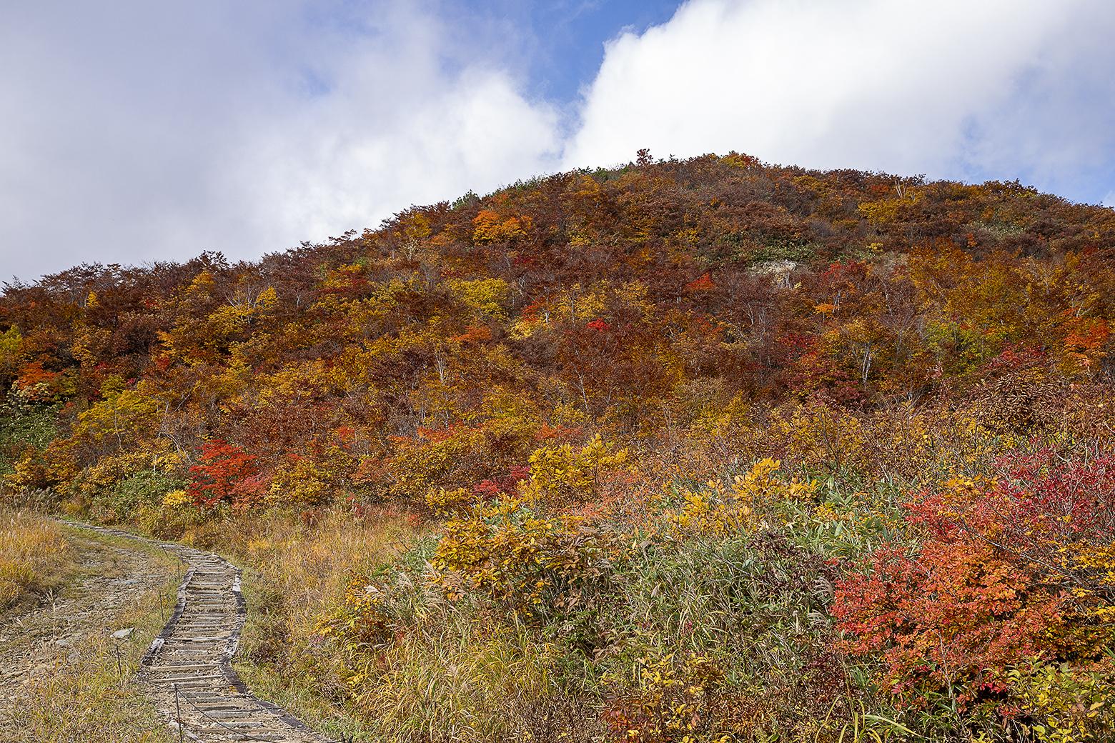 山肌を彩る紅葉