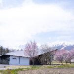 【2021年版】春の白馬エリア 桜スポット観光ガイド