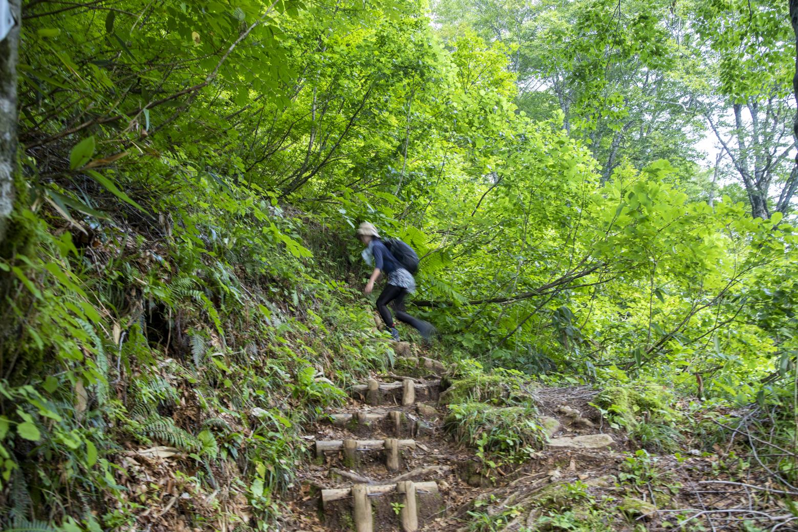 スタートから15分。本格的な登りに
